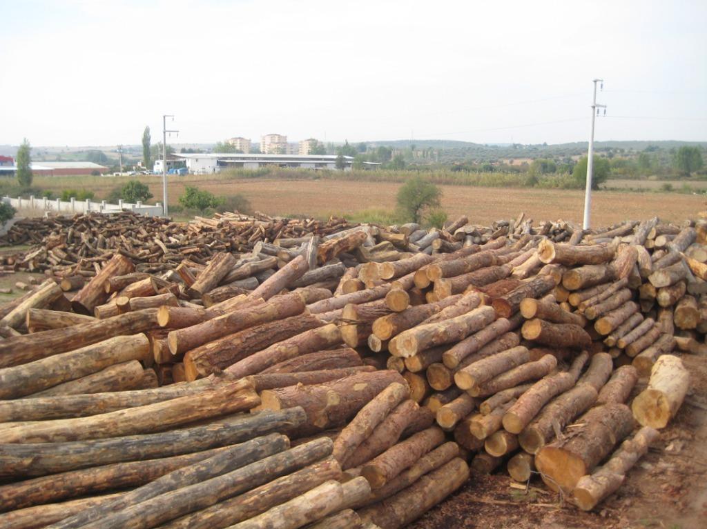 Palet ve Orman Ürünleri
